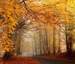 Autumn_101665766386